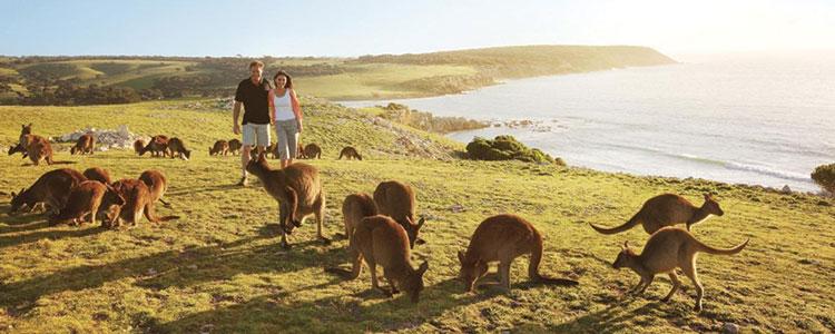 Passer les vacances en Australie